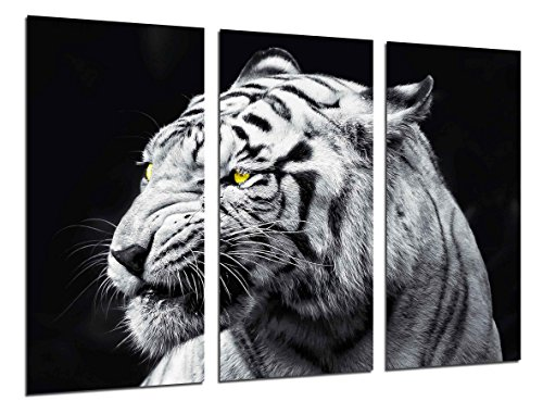 Cuadro Fotográfico Naturaleza Animales Salvajes, Tigre Blanco Tamaño