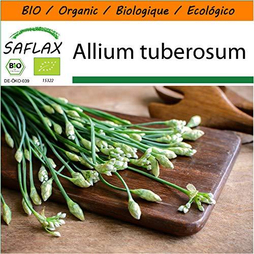 SAFLAX - Jardin dans le sac - BIO - Ciboulette de Chine - 100 graines - Avec substrat de culture dans un sac de levage facile à manipuler. - Allium tuberosum