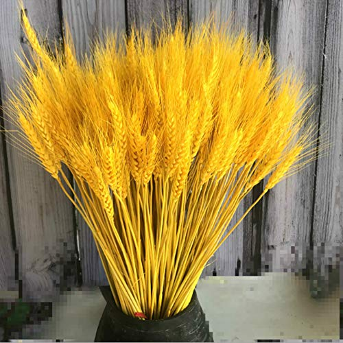 Country Living Natural Wheat Ears Wedding Supplies Home Decoration 100pcs (Golden)