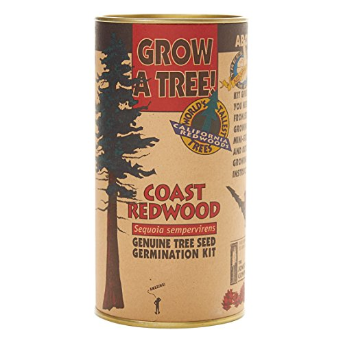 Coast Redwood | Tree Seed Grow Kit | The Jonsteen Company