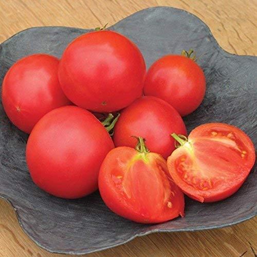 Las Semillas de germinación: 25 - Seeds: Casa Momtaro Las Semillas de Tomate híbrido - dominante de Mercado Fresca de Tomate cultivadas en Japón!