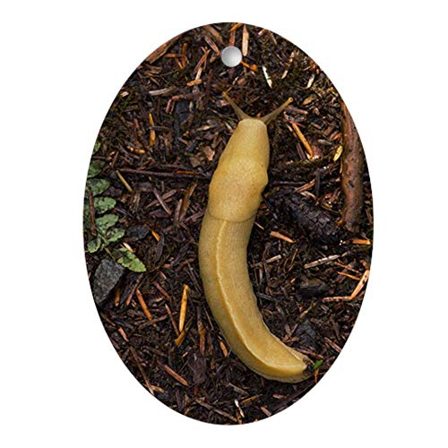 NaYing Store Memorial Gifts Pacific Banana Slug Oval Holiday Christmas Ornament NO: 1846
