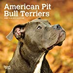 American Pit Bull Terriers 2020 7 x 7 Inch Monthly Mini Wall Calendar, Animals Dog Breeds 3