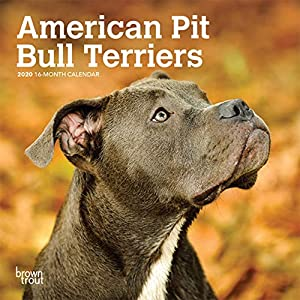 American Pit Bull Terriers 2020 7 x 7 Inch Monthly Mini Wall Calendar, Animals Dog Breeds 12
