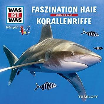 03: Faszination Haie / Korallenriffe