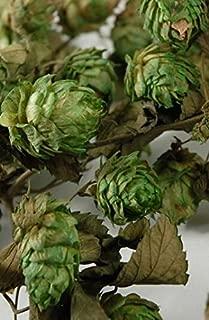 Richland Natural Hops Garland Air Dried 18