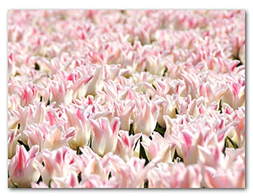 Tulpenmeer 10 - Cuadro XXL de pared horizontal (120 x 90 cm,...