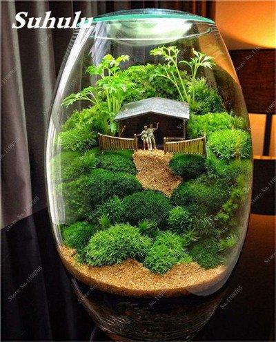Vert mousse Graines 120 Pcs exotiques rares Graines Bonsai Moss Belle Moss Boule décorative Jardin créatif herbe Graines Plante en pot 11