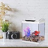 Zoom IMG-2 dadypet mini acquario acquari per