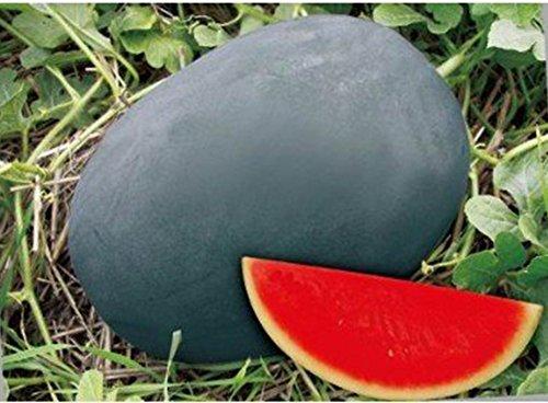 (Noir * Ambizu *) Heirloom gris peau Big long rouge doux pastèque sans pépins de semences biologiques, Paquet professionnel, 50 graines