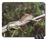 マウスパッド-カメレオン目の爬虫類動物トカゲ野生動物の頭