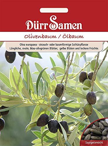 Dürr-Samen - 8 x Olivenbaum Saatgut...