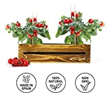Zoom IMG-2 kit vintage per coltivare pomodori