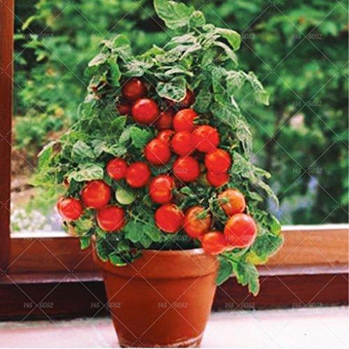 200 pcs/sac graines de tomates bonsaï, délicieuses graines de tomates cerises, graines non-OGM légumes balcon comestible plantes en pot de jardin 2