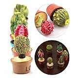 Gedourain Decoración De La Casa De Muñecas, Minúsculo Cactus, Respetuoso con El Medio Ambiente Y Duraderas, Grandes Decoraciones para El Kit De Casa De Muñecas En Miniatura 1:12