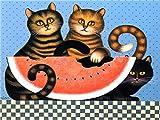 gatto mangia solo secco