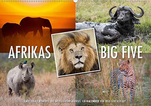 Emotionale Momente: Afrikas Big Five/CH-Version (Wandkalender 2021 DIN A2 quer)