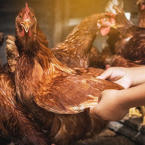AniPlus – Kieselgur Spray 400 ml für Kaninchen & Nager gegen alle kriechenden Insekten und Schädlinge (100% biologisch) - 4