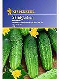 Kiepenkerl Salatgurke Delikateß