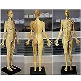 ZHANGYY Modelo de Figura de anatomía Femenina - Modelo de Pintura anatómica de Esqueleto Humano - Mo...