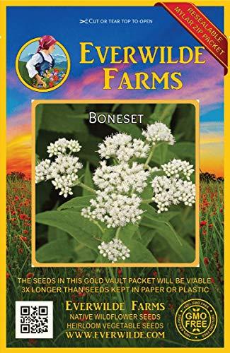 Everwilde Farms - 2000 Boneset Native Wildflower Seeds - Gold Vault Jumbo Seed Packet