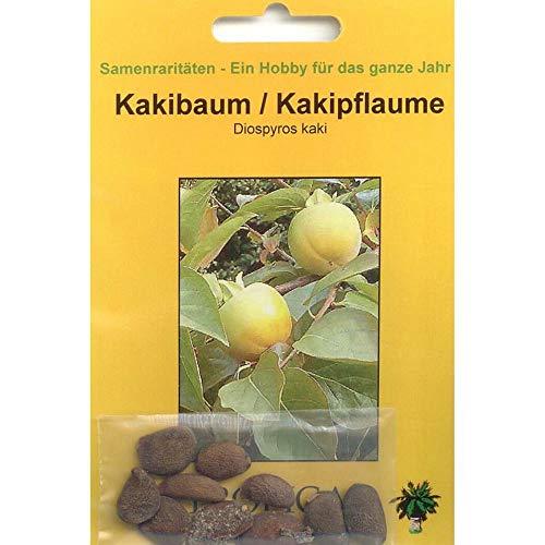Bonsai - 10 Samen von Kakipflaume, Diospyros kaki, 90074