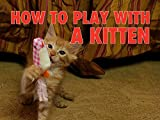 Clip: How to Play With a Kitten