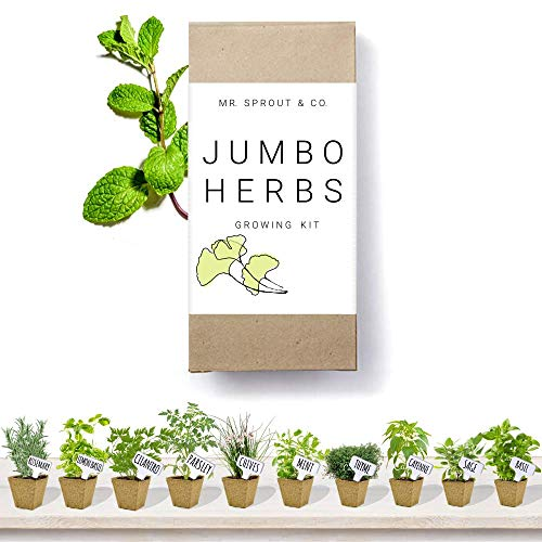 Herb Garden Starter Kit Indoor - 10 Herb Seeds for Planting Indoors in a Gardening Kit | Seed Grow Kit for Kitchen Herbs | Growing Fresh Basil Oregano Cilantro Sage Rosemary Parsley -by Mr Sprout