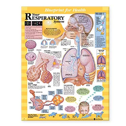 Gráfico del plan del sistema respiratorio (plan para la salud)
