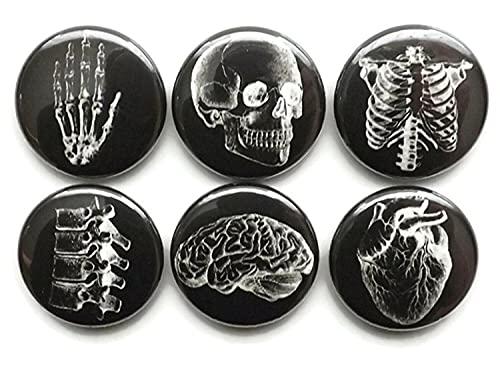 Anatomy Refrigerator Magnets 1 inch White on Black Skull Brain Anatomical Heart Human Body Medical Gift