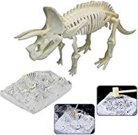 Water cup 医療モデル3Dパズル恐竜化石スケルトンフィギュアおもちゃ子供のための教育シミュレーション恐竜骨セット3Dモデル