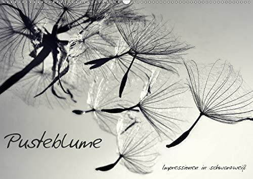 Pusteblume - Impressionen in schwarzweiß (Wandkalender 2021 DIN A2 quer)