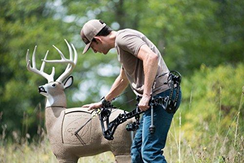 GlenDel Pre-Rut Buck 3D Archery Target