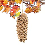 Collections Etc Pine Cone Coated with Premium Bird Seed Bird Feeder Attracts a Variety of Backyard Birds