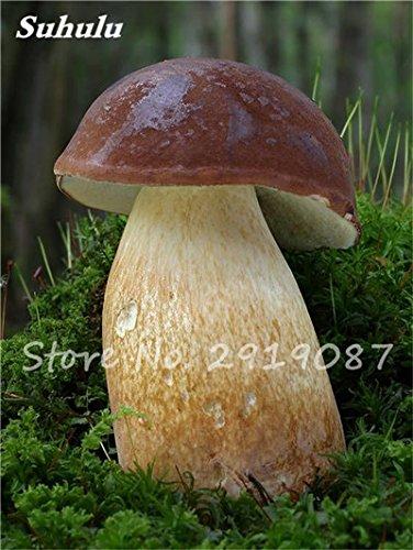 Super Big champignons Graines 40 Pcs Succulent délicieux drôle Fungus biologique des plantes, graines comestibles de santé faciles à cultiver pour le jardin 8