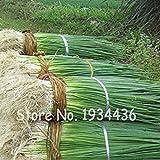 200 pc esotico scalogno four seasons evergreen biologica delicious scallion bonsai di verdure flower pot fioriere facile coltivare cibo