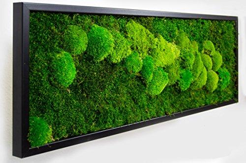 Moosbilder Wandgestaltung, Bild mit Moos und Bilderrahmen, Moosbild, Mooswand, Wandbild, Kugelmoos Moosplatte Pflanzenbilder Moosbilder versch. Maße günstig (100 x 35 cm, weiß)