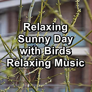 Relaxing Sunny Day with Birds Relaxing Music