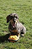 Hundespielzeug Quietsch-Leberkäs-Semmel zum Quietschen und Spielen - 2