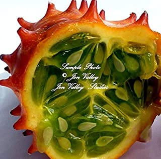 20 Seeds African Horned Cucumber Vegetable Garden Natural Non GMO Heirloom African Kiwano Unique Fun Easy to Grow Cool Prehistoric Look by yunakesa