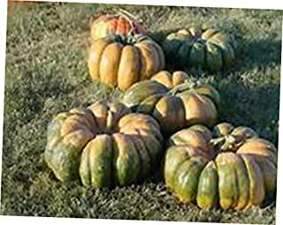 HNM 15 Seeds Rare Multi-Colored Cinderella Pumpkin Seeds - LY810