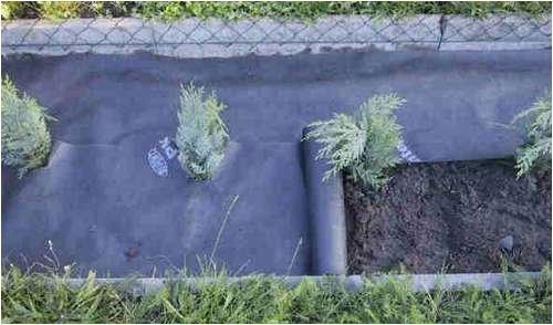 Plantex® Heckenvlies Unkrautvlies 0,5 x 20 m von DuPont™