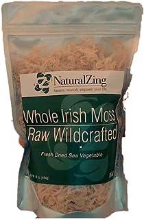 Irish Moss, Fresh (Raw, Wildcrafted) 16 oz