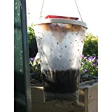 2pièges à mouches–peut attraper et tuer jusqu'à 20000mouches,...