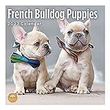 2022 French Bulldog Puppies Wall Calendar by Bright Day, 12 x 12 Inch, Cute Dog