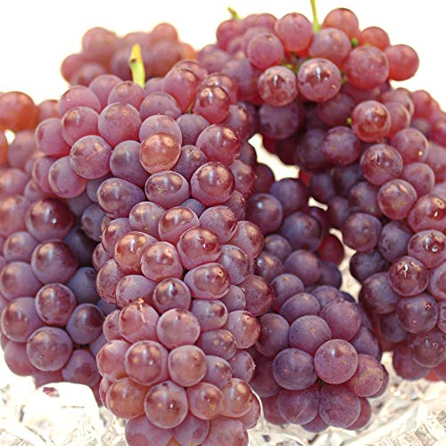 国華園 ぶどう デラウェア 約1kg お買得 山形産 ご家庭用 葡萄 ブドウ