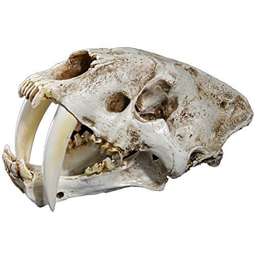 SDBRKYH Escultura de Calavera de Tigre Dientes de Sable, réplica de Resina de Calavera Animal Horror Skull Model Home Bar Decoración de Halloween 32 * 18.5 * 18Cm
