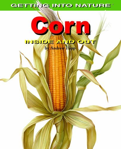 Corn: Inside and Out