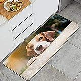 Alfombra de Cocina, Animal Beagle Perros Mirando sospechas...