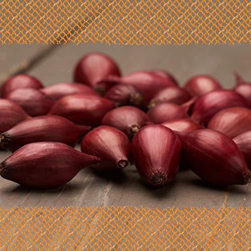 FLORTUS 2000-0256-500g Steckzwiebeln Red Baron 500 g I Zwiebeln in hoher Qualität pflanzen I Gemüsezwiebel I Steckzwiebelgröße 14 - 21 mm